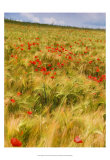 Poppies in Field I