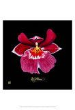 Vivid Orchid VIII