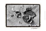 Sand Treasures II