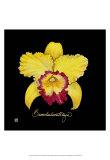 Vivid Orchid VII