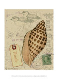 Postcard Shells I
