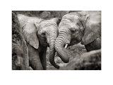 Eléphants amoureux Reproduction d'art par Marina Cano