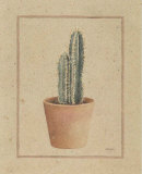 Trichocereus