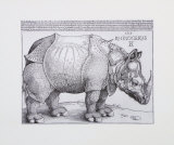 Rhinoceros  c1515