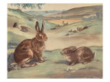 Woffly The Rabbit And Quick Ears The Hare