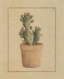 Opuntia Vulgaris