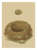 Antique Nest and Egg IV