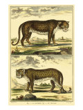 Diderot's Panther and Leopard Reproduction d'art par Denis Diderot