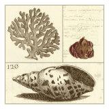 Shell Classification III