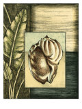 Small Tropical Shell III