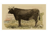 Antique Cow V