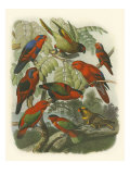 Red Cassel Birds II