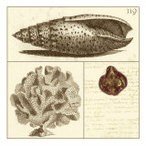 Shell Classification II