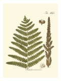 Small Antique Fern VI