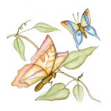 Fluttering Butterflies II