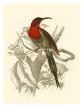 Jardine Hummingbird VI