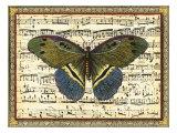 Butterfly Harmony II