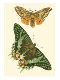 Papillion I