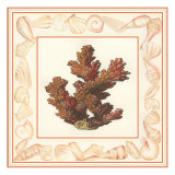 Coral with Shell Border II