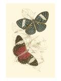 Jardine Butterflies I