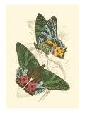 Jardine Butterflies III