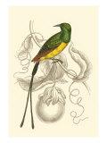 Jardine Hummingbird I