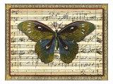 Butterfly Harmony I