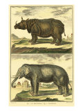 Diderot&#39;s Elephant and Rhino