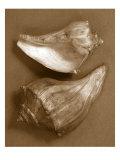 Sensual Shells I
