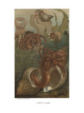 Hermit-Crabs
