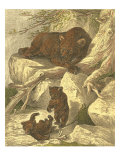 Small Brown Bear