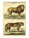 Diderot&#39;s Lion and Tiger