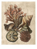 Shell and Coral on Cream I
