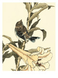 Oriental Bird on Branch II
