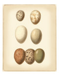 Bird Egg Study II