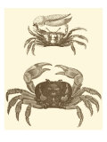 Sepia Crabs I