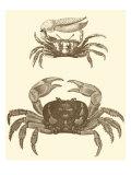 Sepia Crabs I