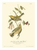 Black-throated Green Wood Warbler Reproduction d'art par John James Audubon