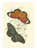 Jardine Butterflies II