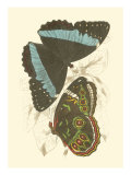 Jardine Butterflies VI