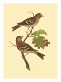 Antique Bird Pair II