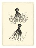 Sepia Octopus