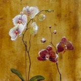 Orchid Bloom II