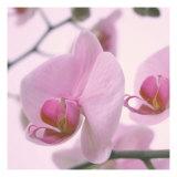 Lavender Mist I