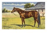 Citation  Kentucky Derby Winner