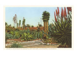 Cactus Garden  Huntington Grounds  San Marino  California
