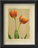 Tangerine Tulips I