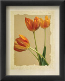 Tangerine Tulips II
