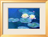 Waterlilies  Evening