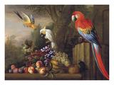 Parrots Of Paradise